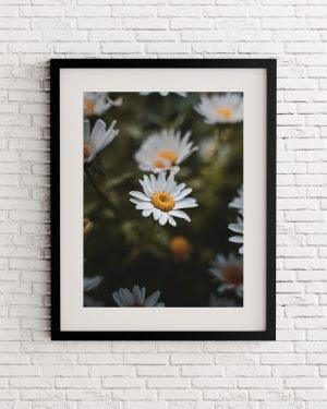 Daisies print - Flores - Naturaleza - Alvaro Valiente